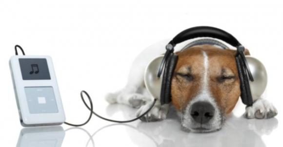 El-efecto-de-la-musica-en-los-animales. Fuente:curiosidades.batanga.com