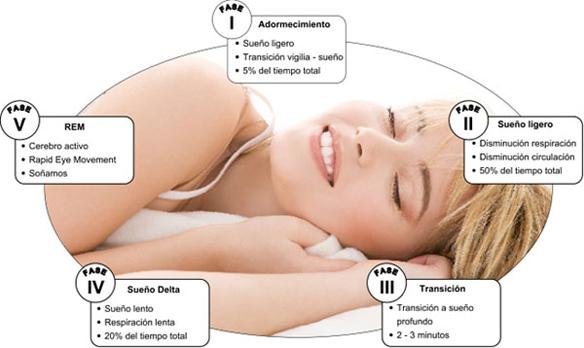 etapas del sueño. Fuente: http://melatonina-insomnia.com/