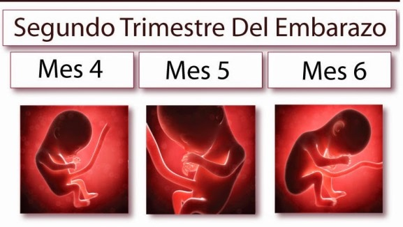 Segundo Trimestre. Fuente: http://www.sanayhermosa.com/
